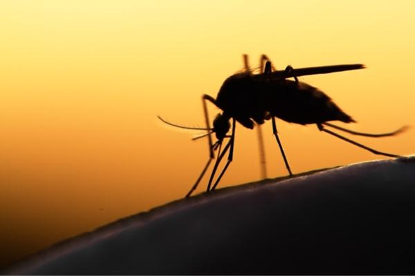 Effektiver Schutz vor Zecken und Stechmücken für Mensch, Hund & Katze