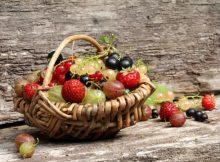 Hausmittel gegen Fruchtfliegen und Obstfliegen