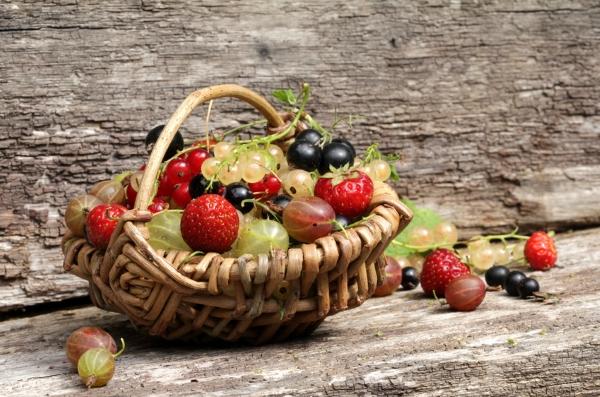 Hausmittel gegen obstfliegen so besiegen sie die plagegeister k niglich alt werden - Was tun gegen fruchtfliegen im zimmer ...