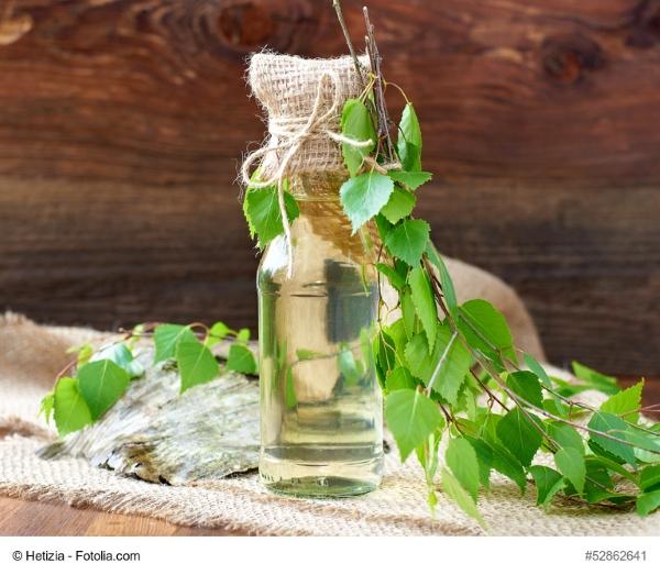 Birkenwasser ist gesund, fast schon ein Superfood. Wie man es selbst zapfen kann