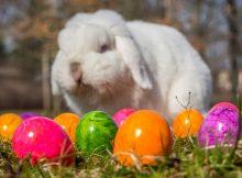 Gefärbte Ostereier im Handel können gesundheitsschädlich sein