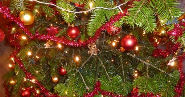 Weihnachtsbaum kaufen: Tipps, Pestizide, Öko Weihnachtsbaum & regional