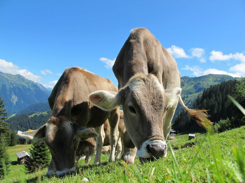 Umweltschutz und Klimaschutz: Klimasünder unter den Lebensmitteln
