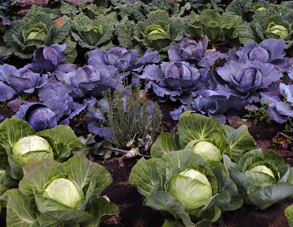 Tiefkühlobst und -Gemüse wird schnell verarbeitet und kommt oft aus heimischem Anbau