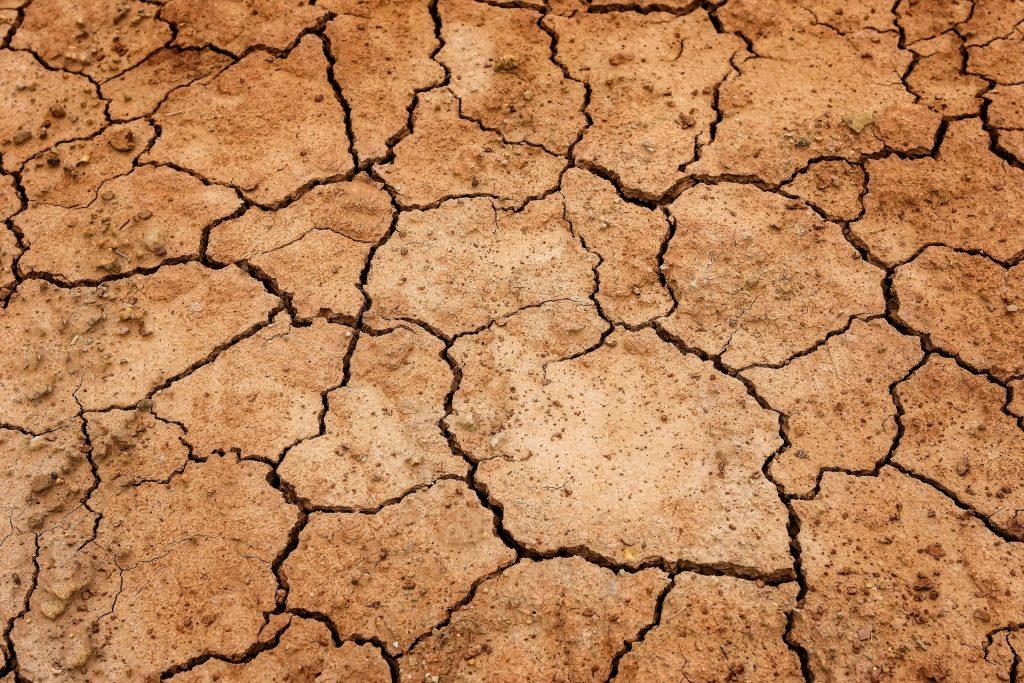 Landwirtschaft Hitzesommer Bodenerosion und Artenvielfalt
