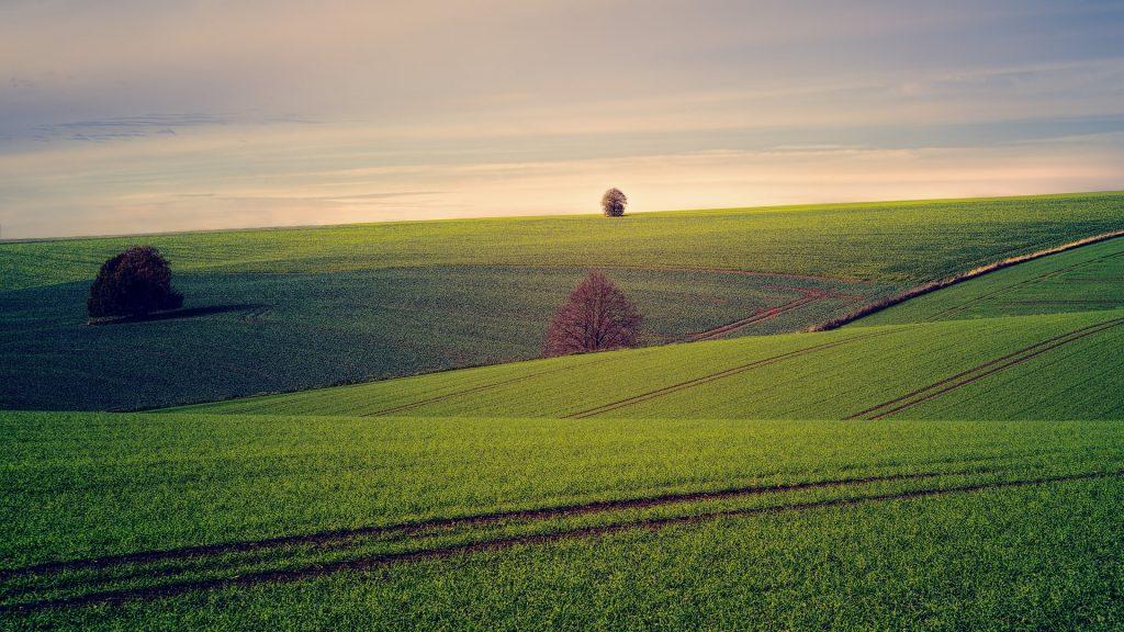 Landwirtschaft und Monokulturen