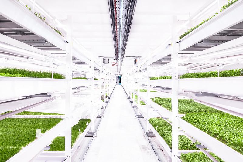 Urban Farming Growing Underground