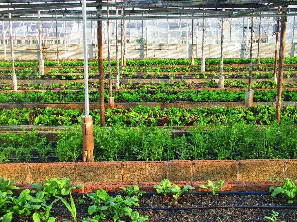 Urbane Landwirtschaft ist weit mehr als Anbau in einem Gewächshaus