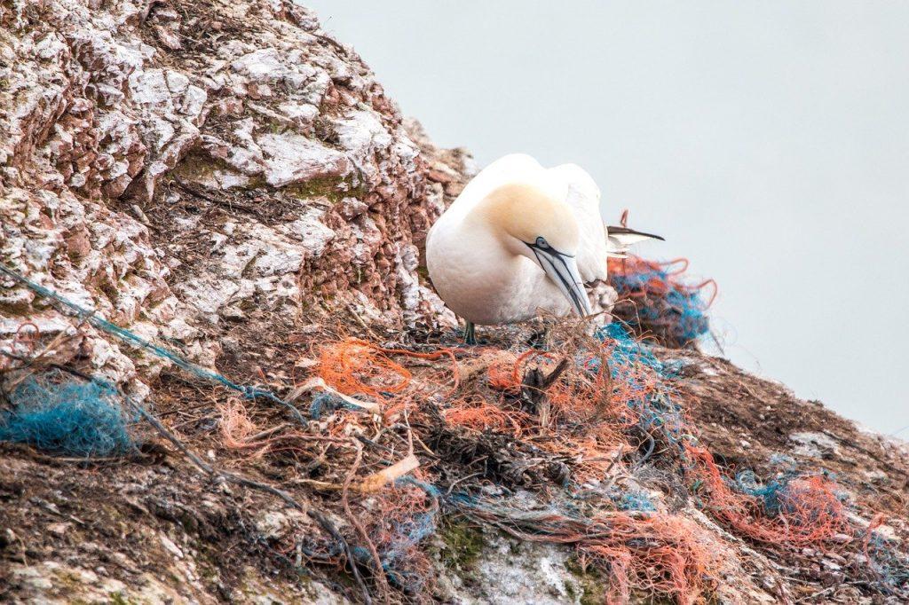 Mikroplastik längst nicht mehr nur in den Meeren